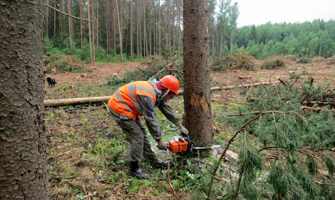 На Косівщині незаконно зрубали 50 кубометрів лісу