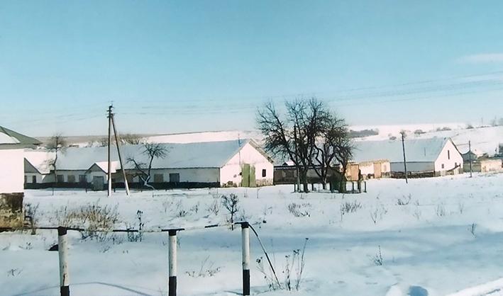 «Заморожені» об'єкти «Золотого колосу» – тваринницька ферма в с. Серафинцях у 2006–2007 рр. (фото з архіву).