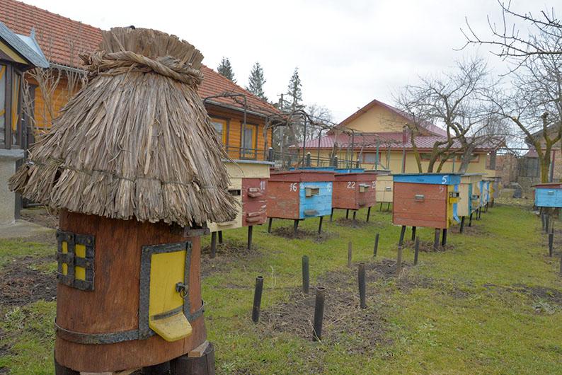 Обійстя пасічника Віктора Кондрюка у селі Перерові.